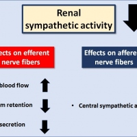 Renal Denervation as an Innovative Treatment for Resistant Hypertension – a Survey
